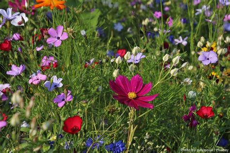Interesting facts about wildflowers | Just Fun Facts
