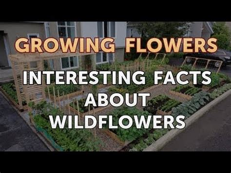 Interesting Facts About Wildflowers   YouTube