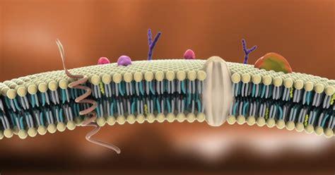 Introducción a la biología celular  II : la membrana ...