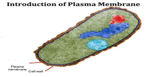 Introduction of Plasma Membrane   Assignment Point