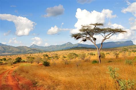 Introduction to Kenya   a brief guide for all travellers!