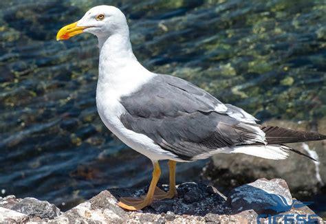 Investigadores estudian aves marinas en islas mexicanas ...