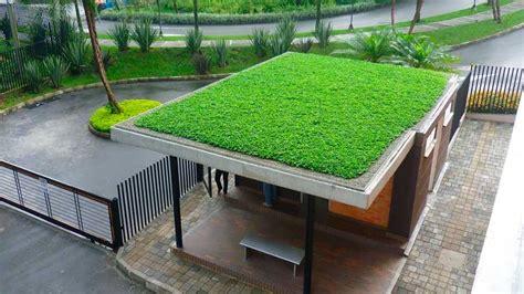 Investigadores mexicanos crean techos verdes económicos y ...