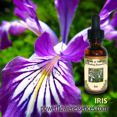 Iris Flower Essence | Iris Flower Remedy