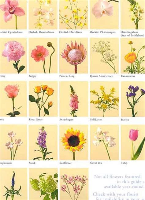 Irish Flowers and Their Meanings | Pics of flowers and ...