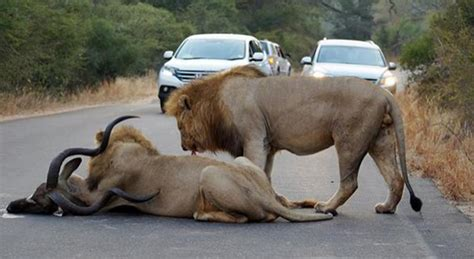Is it true that if a tourist visiting South Africa falls ...