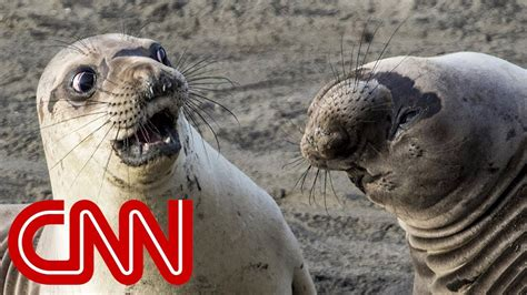 Is shocked seal the funniest wildlife photo of 2017?   YouTube
