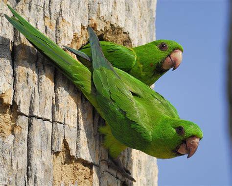 island life  in a monastery: TEXAS BIRDS