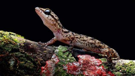 Islas Galápagos   Descubren dos nuevas especies de ...