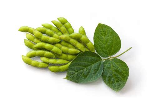 Isoflavonas de soja: beneficios y contraindicaciones