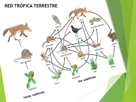israelgonzalez_ecología y medio ambiente: Actividad ...