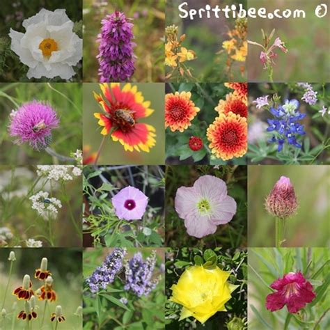 It s Good to Know Your Local Flowers by Name.   Sprittibee