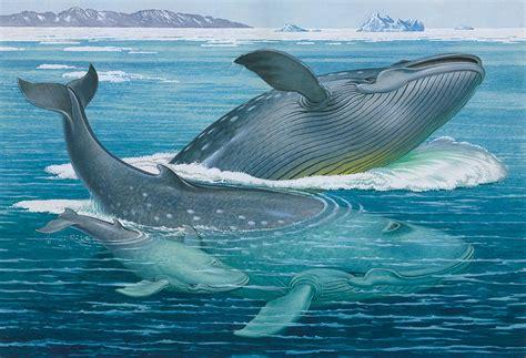 ITACA: La ballena azul