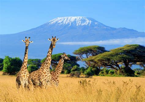 Itinerario de viaje a Kenia de 15 días | IATI Seguros
