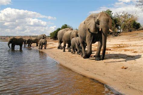 iTravel International The Botswana Migration – The iTravel ...