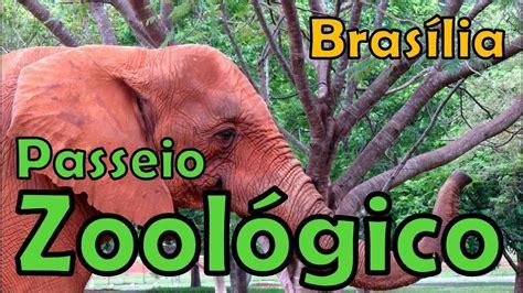 Jardim Zoológico de Brasilia   DF  veja em Full HD    YouTube