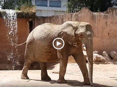 Jardim Zoológico de Lisboa | 1001 TopVideos