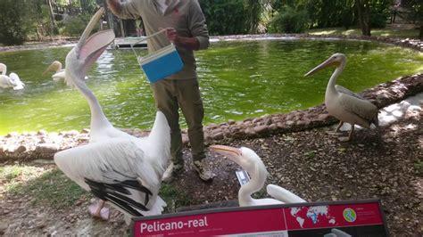 Jardim Zoologico de Lisboa 2016   Alimentação dos ...