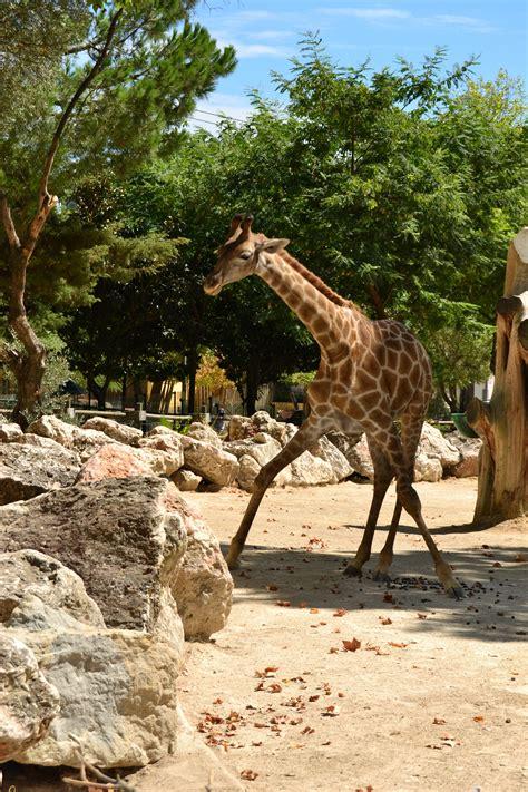 Jardim Zoológico de Lisboa | O que fazer em Lisboa
