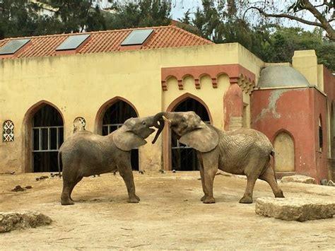 Jardim Zoologico de Lisboa   Picture of Lisbon Zoo, Lisbon ...