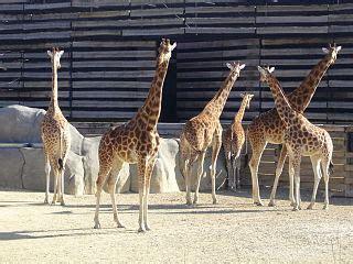 Jardim Zoológico de Paris – Wikipédia, a enciclopédia livre