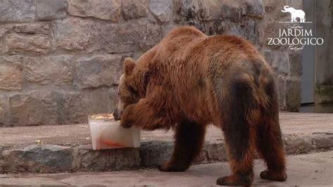 Jardim Zoológico   Enriquecimento Ambiental em Urso pardo ...