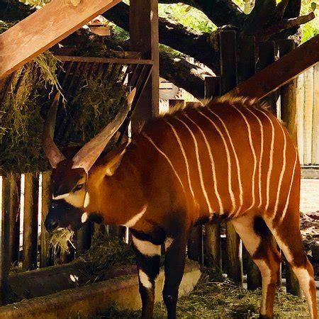 Jardim Zoologico  Lisboa    ATUALIZADO 2019 O que saber ...