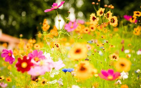 Jardin con flores hd 2880x1800   imagenes   wallpapers ...
