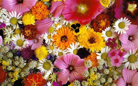 Jardin de muchas flores hd 2560x1600   imagenes ...
