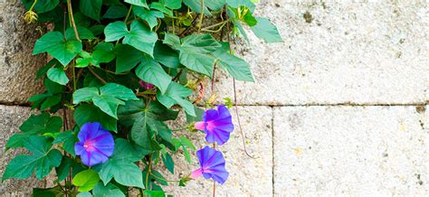 Jardín Paredes vegetales, aprovecha tu terraza   Lidl