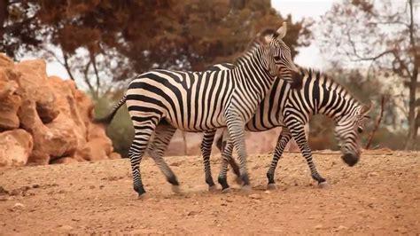 Jardin Zoologique de Rabat   YouTube