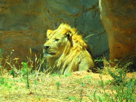 Jardin Zoologique National de Rabat   Aktuelle 2018 ...