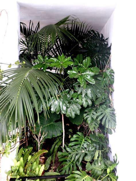 jardinbio: Plantas de sombra  interior?