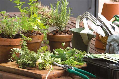Jardinería en casa: cómo multiplicar tus propias hierbas ...