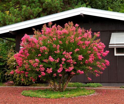 Jardinería y Plantas: 10 árboles para jardines pequeños ...