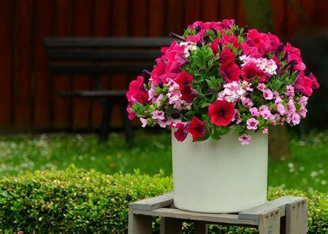 Jardines pequeños con flores: decoraciones no fallan ...