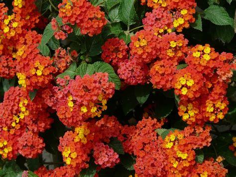 Jardines Verticales Huichol – Plantas de poca agua y mucho ...