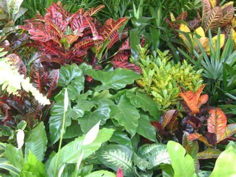 Jardines y Macetas: Fotos de plantas de interior y exterior