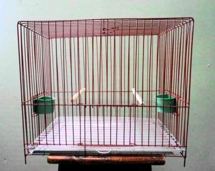 Jaula 37X23X29 cm | Cosas para comprar | Jaulas para aves ...