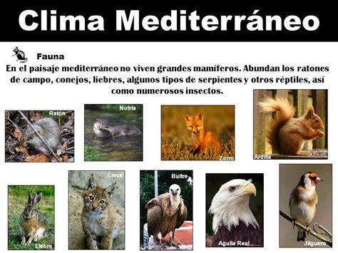 Jhony_2000 Sociales: Clima Mediterráneo