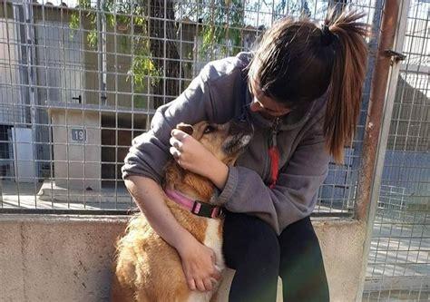 Joves i Solidaris   Voluntariado Valencia   Bienestar animal