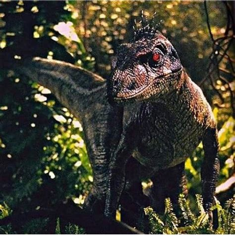 JP 3 male raptor!!   Dinosaurios jurassic world ...