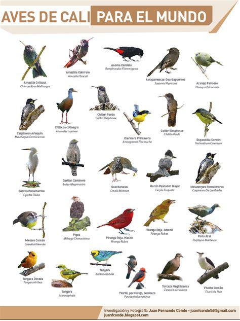 Juan Conde, Pájaros y Naturaleza