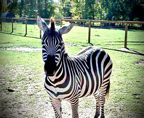 Jubilee Zoo  Shreveport    2020 All You Need to Know ...