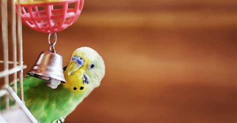 Juguetes para pájaros: cuál es el ideal   Blog Verdecora