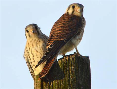 Jungla urbana: cada vez se ven más aves rapaces, que se ...