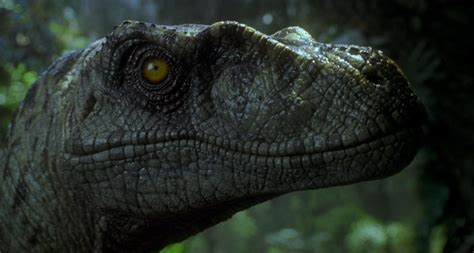 Jurassic Park III  2001 Jurassic Park 3 Movie by Joe Johnston