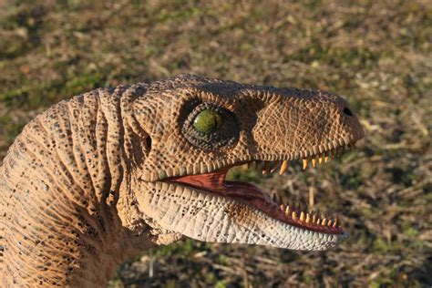 Jurassic Park Velociraptor 3 by yankeetrex on DeviantArt
