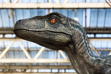 Jurassic Park  was wrong: Study suggests raptors didn t ...