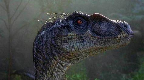 Jurassic World Velociraptor Wallpaper  82+ images